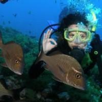 Fotoblog: Mergulho em Noronha – Dive in Noronha