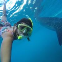 Filipinas: nadando com tubarões-baleia em Oslob