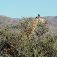 África do Sul: dicas e informações para se viajar pelo país!